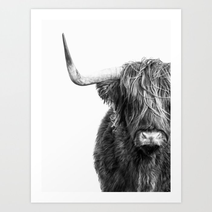 Highland Cow Portrait Black And White Art Print By