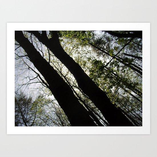 Forest Shadows Art Print