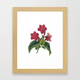 Ruellia Framed Art Print