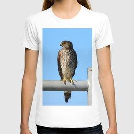 Juvenile Cooper's Hawk T-shirt