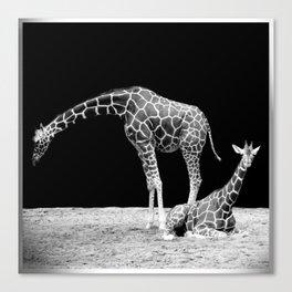 Black and White Giraffes Two Giraffes Canvas Print