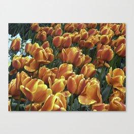 Orange Tulips at Tulip Festival Canvas Print