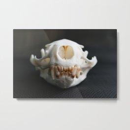 Otter Skull Metal Print