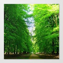 Denmark Forest Canvas Print