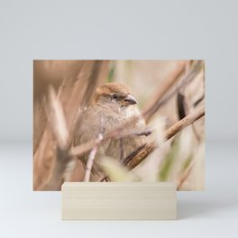 sparrow bird in the tress Mini Art Print