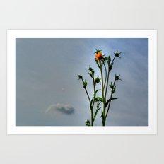 Compass Plant Art Print