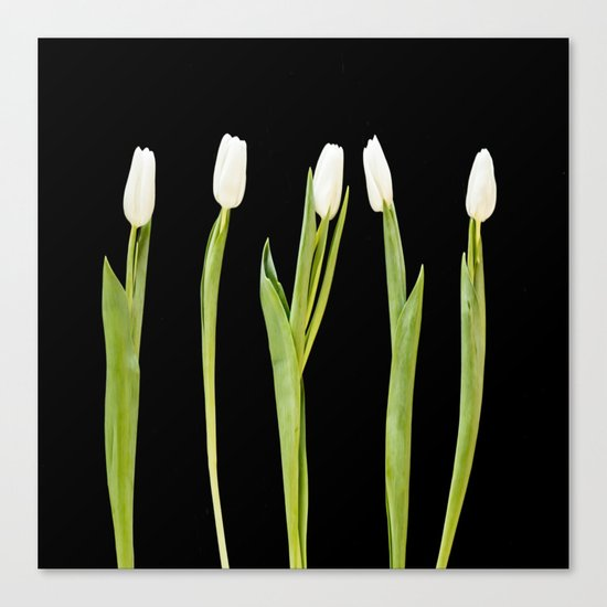 White tulips on a black background Canvas Print
