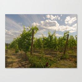 Nichol Vineyards, Naramata B.C. Canvas Print