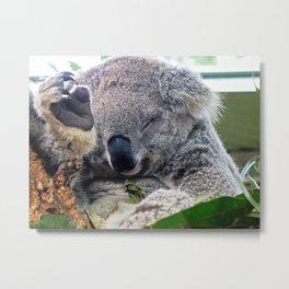 Sleepy Koala Metal Print