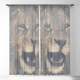 Lion on a walk Sheer Curtain