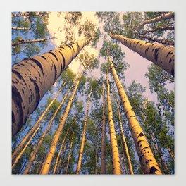 Aspen Trees Against Sky Canvas Print