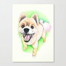 Pomeranian dog  - F.I.P. - Jack-Jack Canvas Print