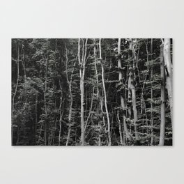 rbdlc 002 Canvas Print
