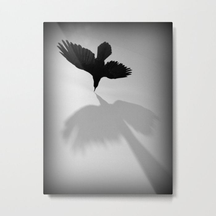 Raven Shadow Metal Print