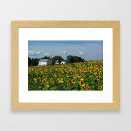 Sunflower Farm  - Pope Farm Conservancy, Wisconsin Framed Art Print