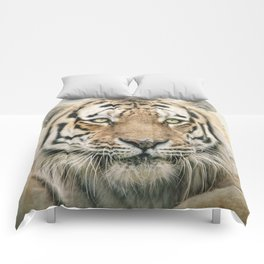 Portrait of a Siberian Tiger Comforters