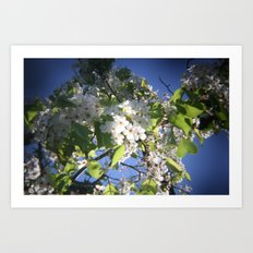 blossoms on vermont Art Print