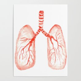Human lungs Poster