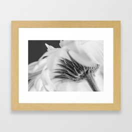 daisy - vanilla ice Framed Art Print