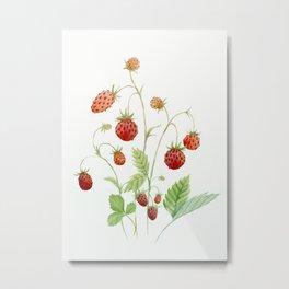 Wild Strawberries Metal Print