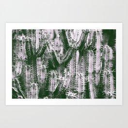 Cholla Cacti Cactus Photo Print Wall Art Image Art Print
