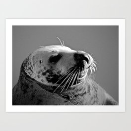 Howth Harbour Seal Art Print