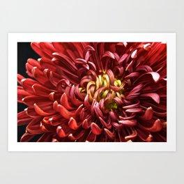Flower Nova Art Print