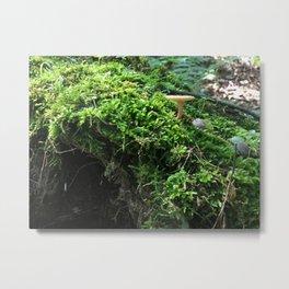 Forest Moss Metal Print