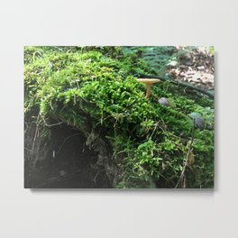 Forest Moss Metal Print