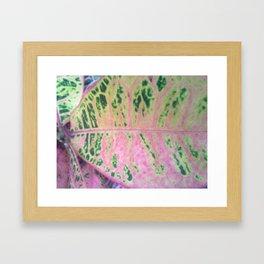CROTON Framed Art Print