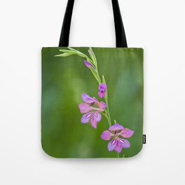 Beauty in nature, wildflower Gladiolus illyricus Tote Bag