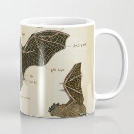 The Eastern Pipistrelle Bat Anatomy Coffee Mug