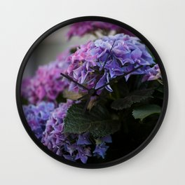 Big Hortensia flowers in front of a window Wall Clock
