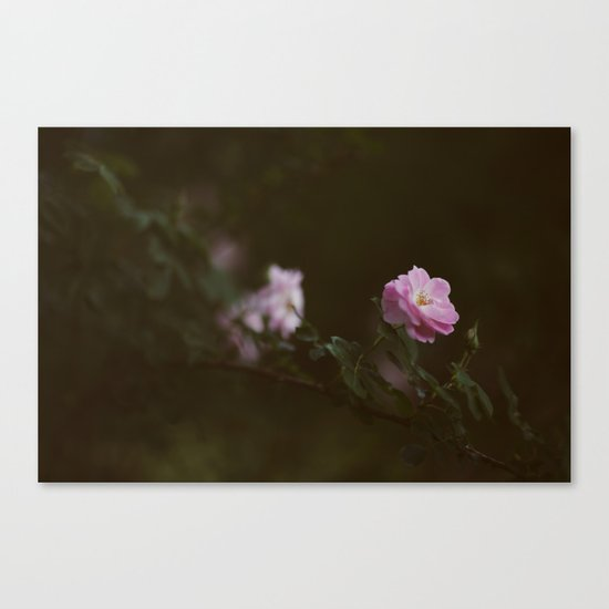 Rose #1 Canvas Print