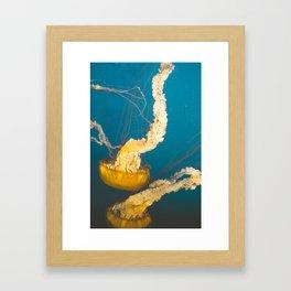 Pacific Sea Nettle Jellyfish I Framed Art Print