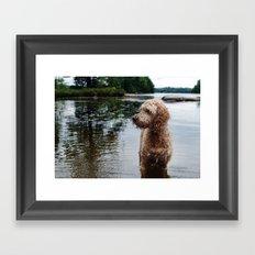 Dog in a lake Framed Art Print