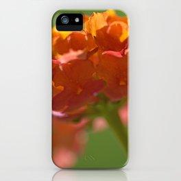 Lantana Camara iPhone Case