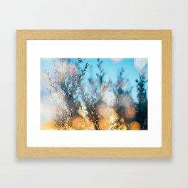 Sunset through the leaves  Framed Art Print