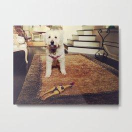 Goldendoodle Dog Metal Print
