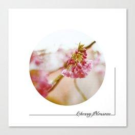 cherryblossom Canvas Print