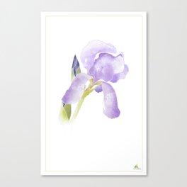 Iris Three Canvas Print