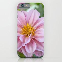 Dahlia Suffusion iPhone Case