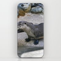 otter iPhone & iPod Skins featuring Otter by Phil Hinkle Designs
