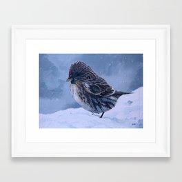 Redpoll Snowstorm Framed Art Print
