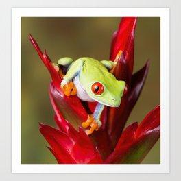 Red Eyed Tree Frog On Bromeliad Art Print