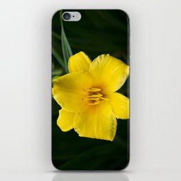 Yellow Daylily Flower iPhone Skin