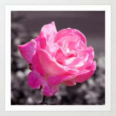 Single Pink Rose Art Print