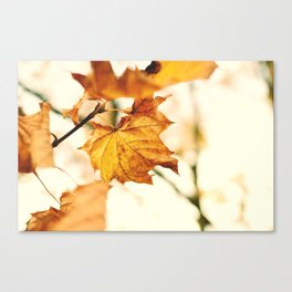 A Fall Like This Canvas Print