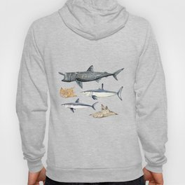 Shark diversity Hoody