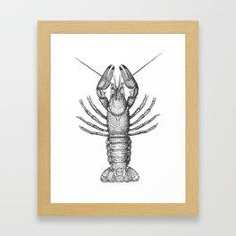 Vintage Lobster Framed Art Print